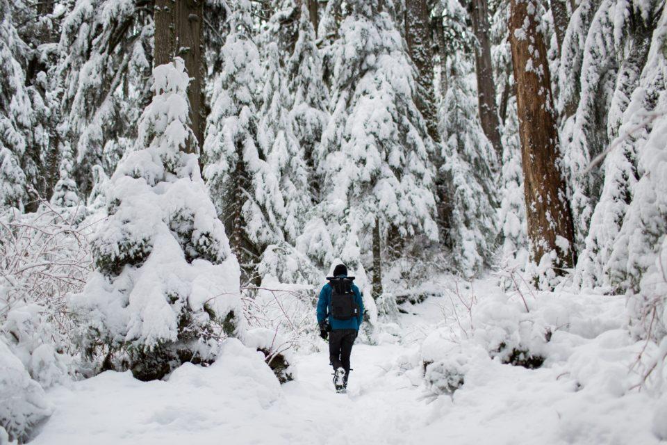 holz100-mondholz-winter
